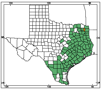 Alligators In Texas Map American Alligator | Herps of Texas